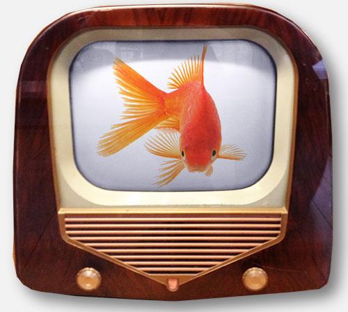 tele-13_goldfish