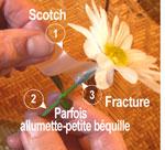 fleurs_chirurgie2.jpg
