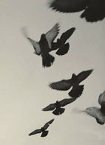 pigeons_chine01.jpg