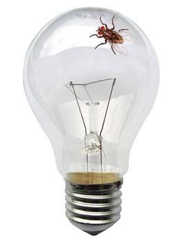 ampoule1.jpg
