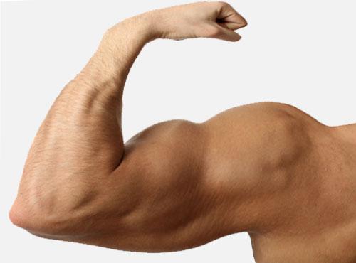 promesses_biceps
