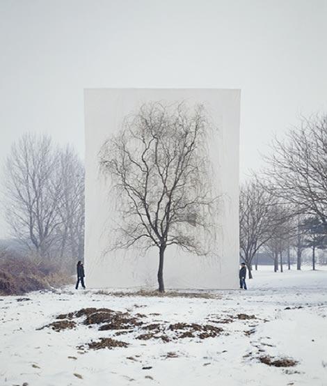 arbre_neige.jpg