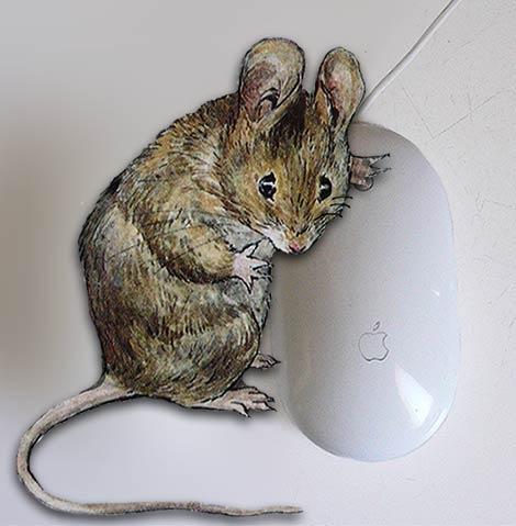 souris_mouse.jpg