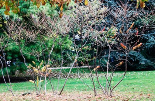 buisson_ardent_2_2751