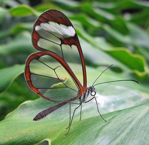 transparence_David-Tiller_