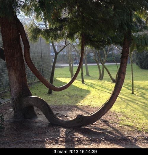 arbres_arrondi_3M_16