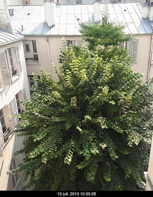 arbre_cour_01