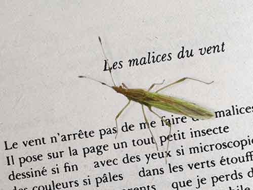 insecte-sur-page