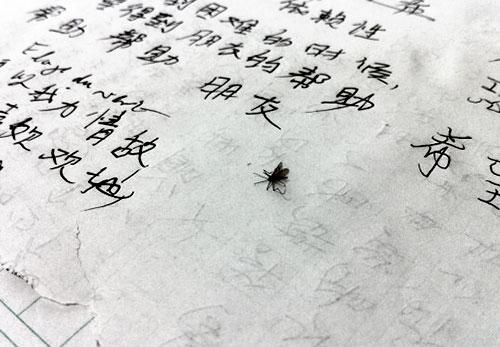 moustique-FangShuo