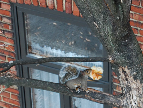 squirrel-bricks_A