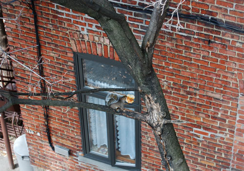 squirrel-bricks_B