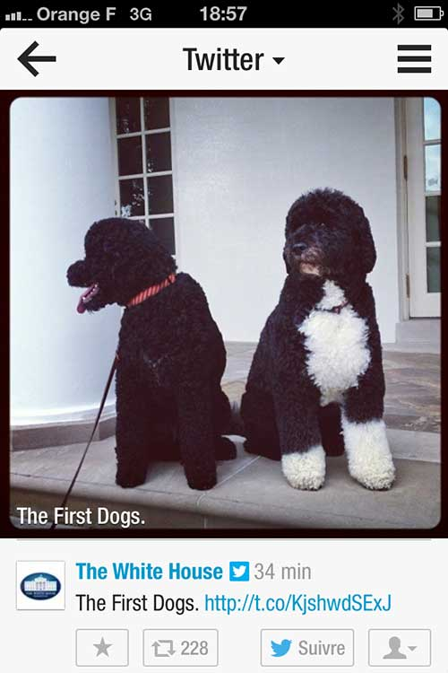 WH_dogs