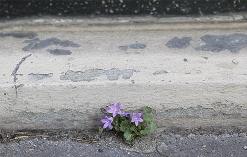fleur_mur