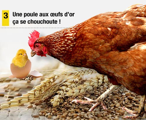 Poule_capitaliste_C