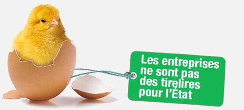 poules_capit_poussins