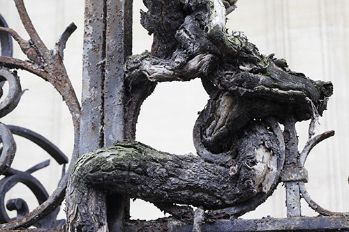 racines_E