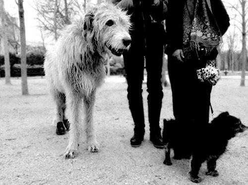 chiens_luco_C