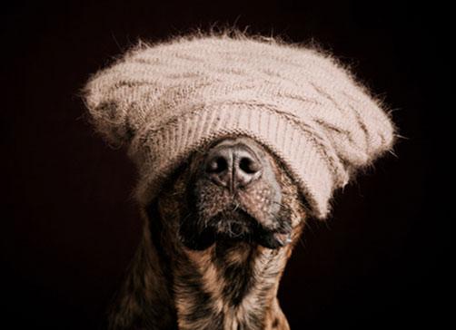 chiens_2