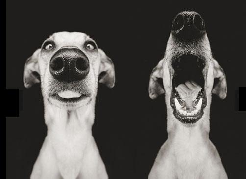 chiens_5