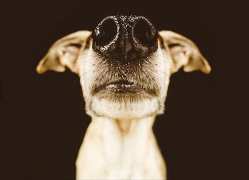 chiens_6