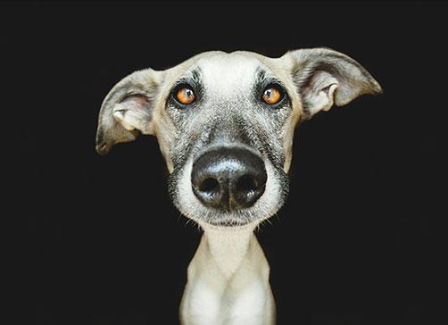 chiens_7