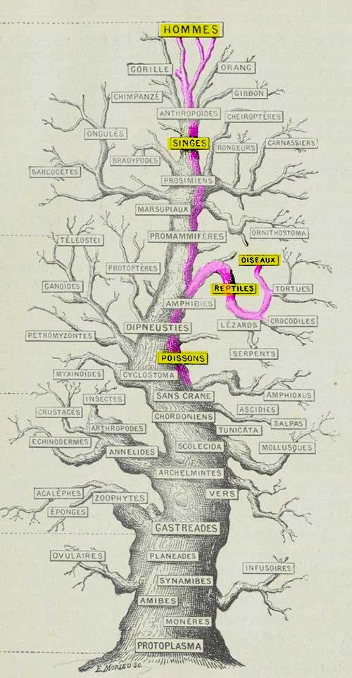 arbre_genealogique