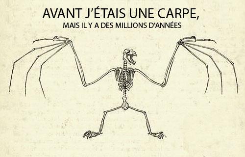 darwin_carpe