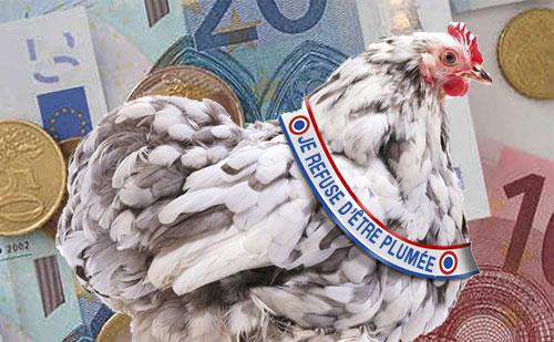 poule_bbr2