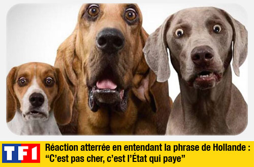 chiens_hollande