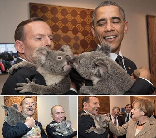 koala_G20